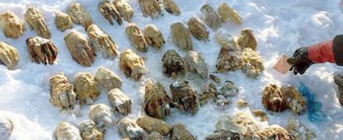 Russia sconvolta da ritrovamento horror: 54 mani mozzate nella neve