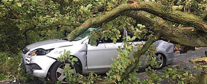 Numerosi alberi caduti a Roma per la pioggia, 40 interventi dei pompieri (video)