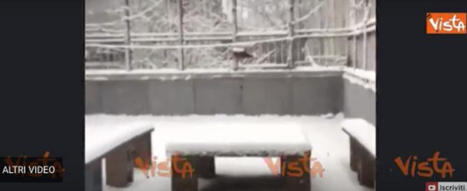 New York si sveglia sotto 15 centimetri di neve. E si ferma anche il baseball (video)