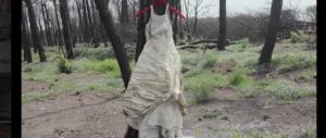 """Sul Vesuvio spunta un abito da sposa. Un """"giallo"""" che ricorda un film…"""