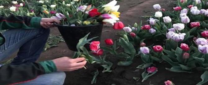 Roma, il parco dei tulipani aperto e subito devastato da visitatori incivili
