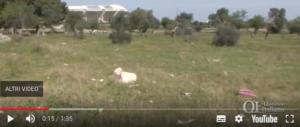 Violentavano bambini rom: ancora orrore intorno allo stadio di Bari (video)