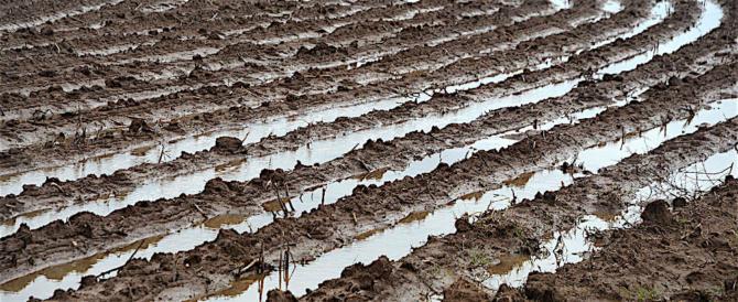 Nubifragi, SOS degli agricoltori per i campi devastati da acqua e grandine
