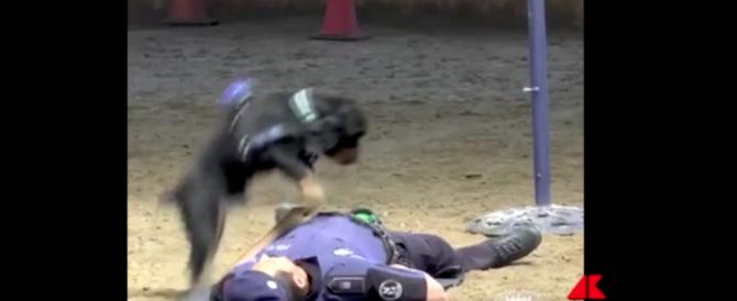 Poncho, il cane che fa il massaggio cardiaco al poliziotto, è diventato una star (video)