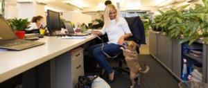 Cane in ufficio col padrone: ecco 10 motivi per cui fa bene ai lavoratori