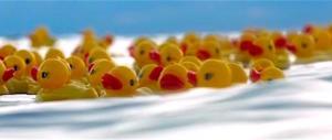 Moby-Duck: la leggenda delle paperelle gialle sull'Oceano (video)