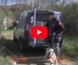 Droga, 26mila piante di marijuana sequestrate nei campi della 'ndrangheta (video)