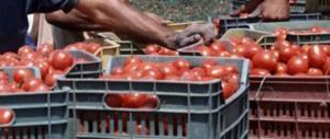 Caporalato a Foggia, braccianti agricoli a bordo in un furgonte fatiscente