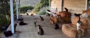 Stipendio, vitto e alloggio per accudire 55 gatti: è boom di candidati