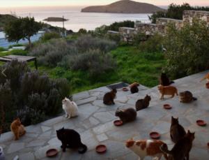 Una foto dei gatti da accudire