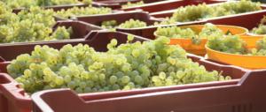 """Meloni con i produttori del Consorzio Prosecco: """"Il governo accolga la loro richiesta"""""""