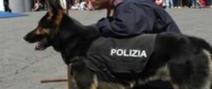 Allarme, c'è un cane fascista: assessore del Pd si copre di ridicolo