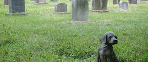 Lombardia, proposta-choc dei 5Stelle: cani (e gatti) sepolti con i padroni