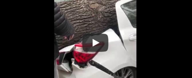 Maltempo, alberi sulle auto a Roma. Ferito un vigile del fuoco (video)
