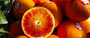 Pomodori del Camerun a Pachino, arance dello Zimbabwe a Catania…