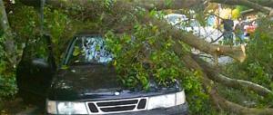Roma, l'unica capitale europea in cui gli alberi cadono ogni giorno…