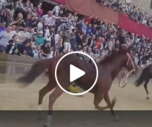 Palio di Siena, insorgono gli animalisti dopo la morte del cavallo Raol (video)