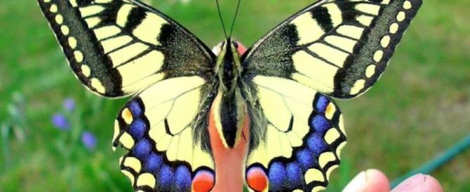 """Salvarono dalla morte il """"bimbo farfalla"""": premiati gli scienziati italiani artefici del miracolo"""