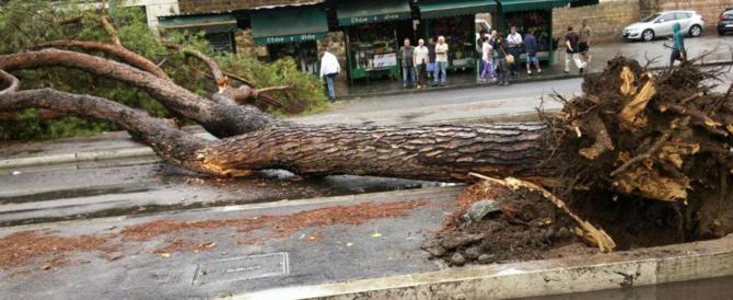 Alberi di Roma da problema a risorsa, la soluzione possibile che aiuta l'ambiente