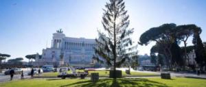Albero di Natale a Piazza Venezia: Spelacchio addio, quest'anno c'è Netflix