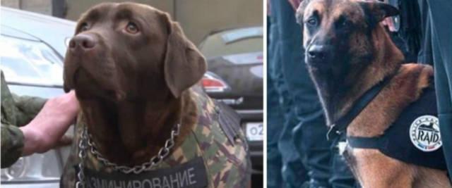 cani delle forze armate