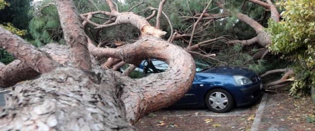 vento alberi