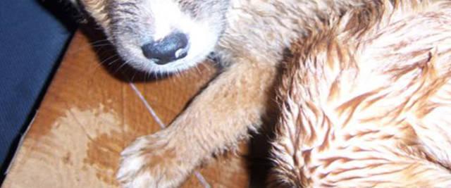cane massacrato di botte dal padrone foto Ansa