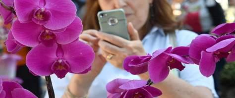 epidemia e fiori foto Ansa