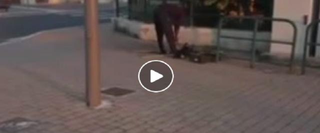 Immigrato arrostisce in strada il gatto appena ucciso frame dal video postato sulla Pagina Fb della Ceccardi